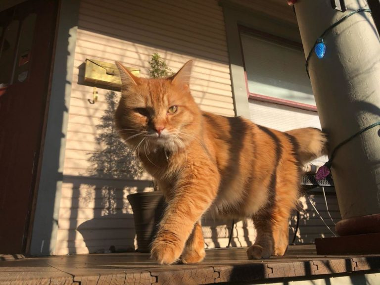 Garfield the cat — and why nextdoor helps with ennui